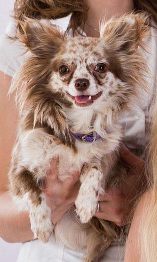 Chihuahua-vom-stockemer-see.com Traffic, Demographics and ...