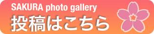 桜フォトギャラリー投稿メールフォーム