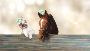 Anima-Balance | TCM für Tiere | Alternativmedizin | Komplementärmedizin | Tiertherapie | Bioresonanz