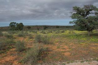 Kalahari wird vom Pepamobil bereist