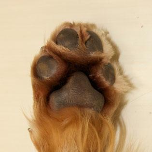 足裏の赤みや毛の変色もよくある症状です。