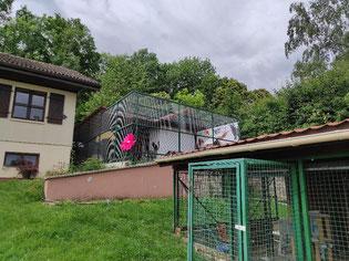 ecole du chat neuvecelle refuge jardin
