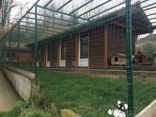 ecole du chat neuvecelle haute savoie refuge jardin