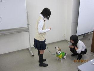 昨年度の様子: ペットの訓練・躾に生徒たちが参加させていただきました