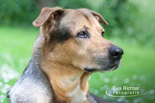 Hundefotografie, Hundeshooting Richter