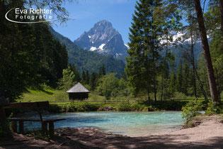 Landschaftsfotografie Flora & Fauna, Richter
