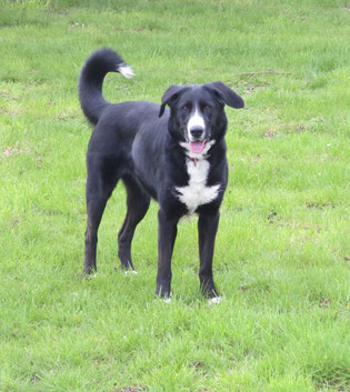 chien à adopter - refuge du Penthièvre - Bréhand - 22 - Bretagne