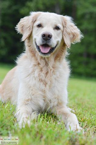 Hundefotografie Fotoshooting Golden Retriever Gütersloh