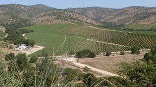 Bild: Weingüter
