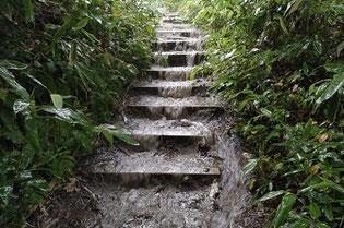 雨の藻岩山登山道