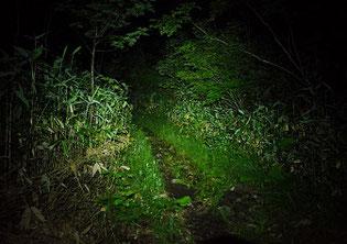 ヘッドライトで照らす登山道