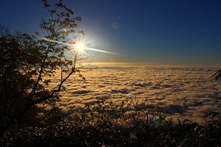 芦別岳新道から見下ろす雲海