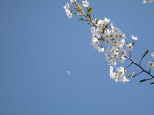 散った花びらのような月です~義経寺にて