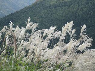 これは鳴子の秋景…コラッセのチラシに使用♪