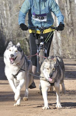 Dikejoren fietsen honden