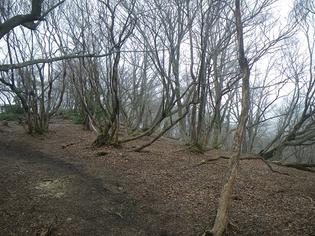 山頂付近、昔の笹原の面影は皆無・・。