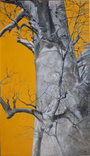 Baobab 70x120 cm