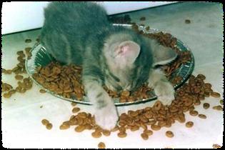 ecole du chat neuvecelle collecte alimentaire nourriture