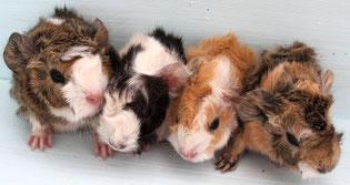Mimma, Muck, Linsy und Suna