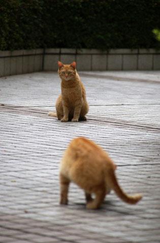 こころを猫に例えると