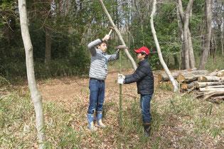 竹の杭を打ち込む
