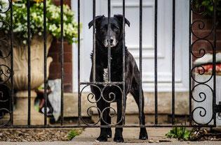 Hund vor Eingangspforte