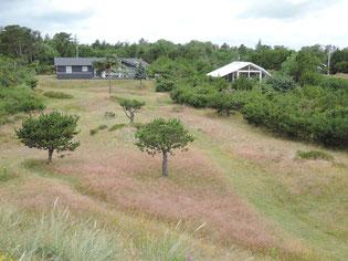 Die meisten der dänischen Ferienhäuser liegen strand- und meernah an Nordsee und Ostsee. Foto: Chr. Schumann, 2020