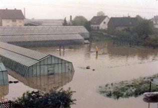 Hochwasser 1978, Gärtnerei Pister