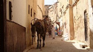 フェズ旧市街。迷路のような街