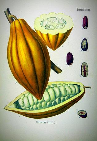von Franz Eugen Köhler, Köhler's Medizinal-Pflanzen
