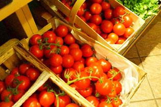 Frisch geerntete Tomaten - Alles BIO!