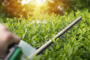 Heckenschnitt, Gartenpflege
