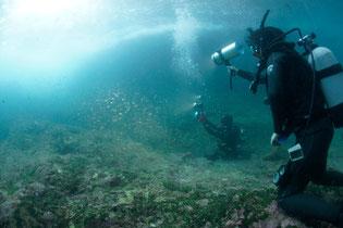 日本水中映像様 さわやか自然百景 水中案内コーディネート