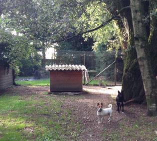 Séjour chez Nos Amis Fidèles, pension pour chiens et chats à Lasnes espace naturel et gestion professionnelle - www.amis-fideles.be