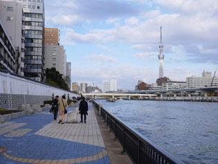隅田川テラス。南千住から佃島付近まで、基本的には両岸にこのような遊歩道が設けられています。