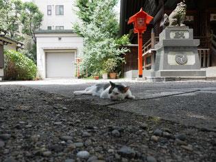 蔵前神社で涼を取る猫さん。撮影当日の気温は34℃。猫も暑いよね。