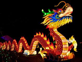 Nach dem chinesischen Horoskop bin ich ein Wasserdrache