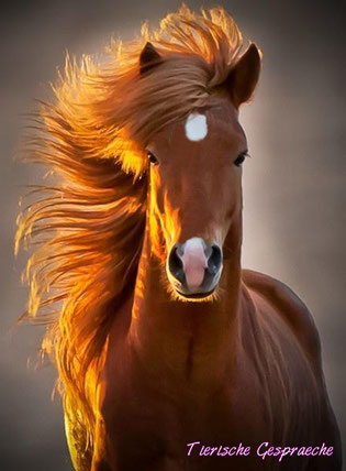 Foto: Ridiculously photogenic horse, http://imgur.com/ikwUmUV, bearbeitet