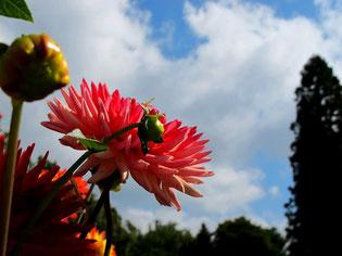 saisonal abgestimme Blumenschauen begeistern die Besucher