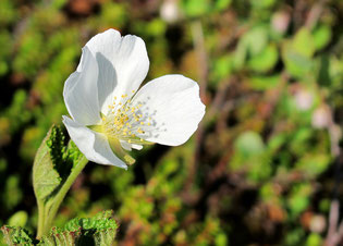Blumen kündigten den Sommer an