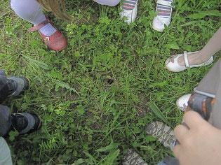 Waldkindergarten Pädagogisches Konzept
