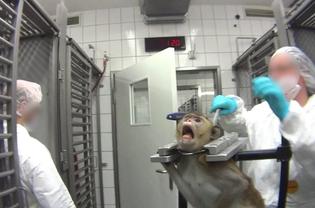 SOKO Tierschutz – Cruelty Free International