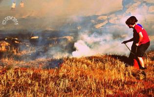 Eine Wiese auf dem Brocken hatte Feuer gefangen
