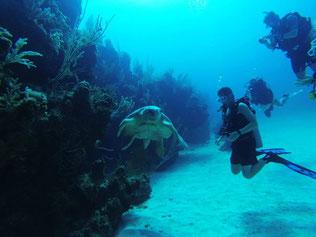 Taucher am Korallenriff mit Meeresschildkröte