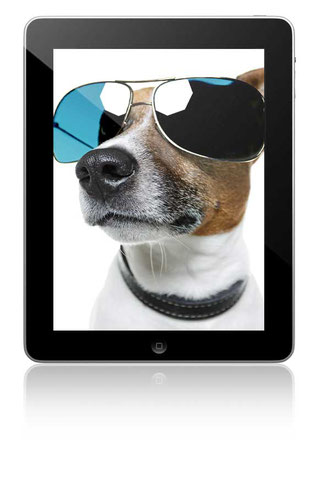 website4everyone dog tablet