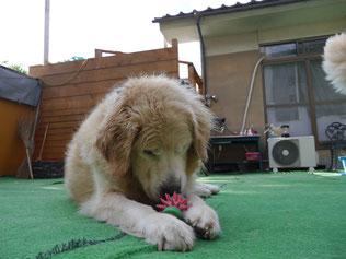 玩具好きね!