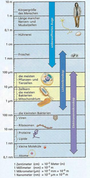 Quelle: Campbell, N. u.a.: Biologie Gymnasiale Oberstufe. Hallbergmoos 2011, S. 48