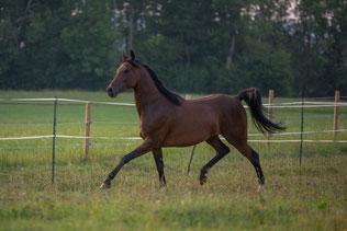 Pferdesprache sprechen, Botschaften der Pferde deuten