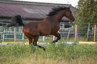 Eigenverantwortliche Pferdehalter sind glücklich