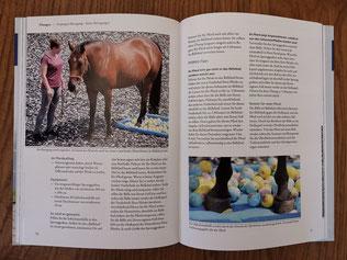 Buch Pferdeergotherapie / PFERGO mit Übungen zu Basissinnen